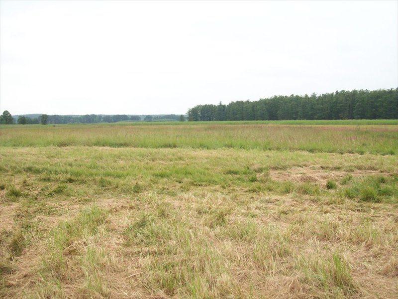Działka rolna na sprzedaż ok. Wrocławia, Polna  700000m2 Foto 3