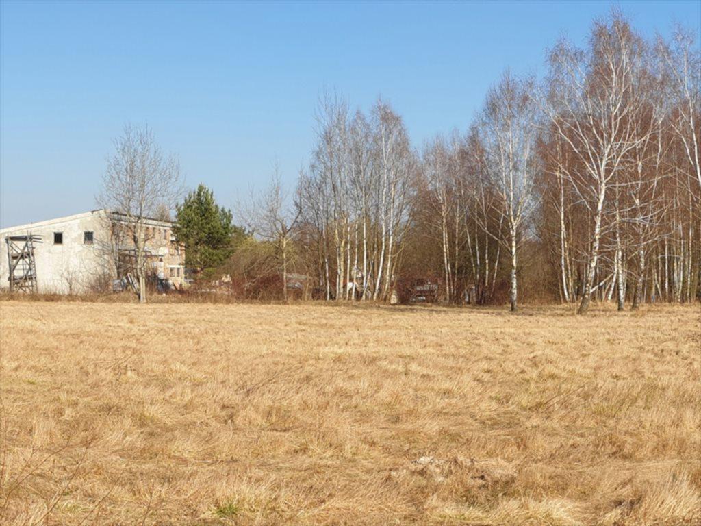 Działka rekreacyjna na sprzedaż Natolin, Nowosolna  4718m2 Foto 4