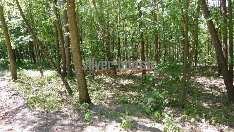 Działka leśna z prawem budowy na sprzedaż Siestrzeń  4000m2 Foto 3