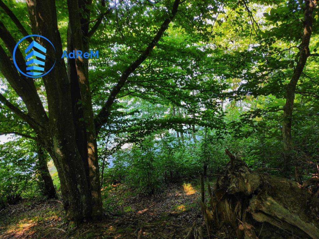 Działka rolna na sprzedaż Przerośl  13500m2 Foto 6