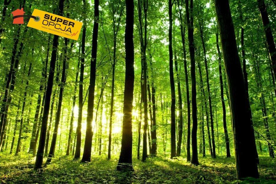Działka leśna na sprzedaż Nowy Wiśnicz, Połom Duży  12300m2 Foto 1