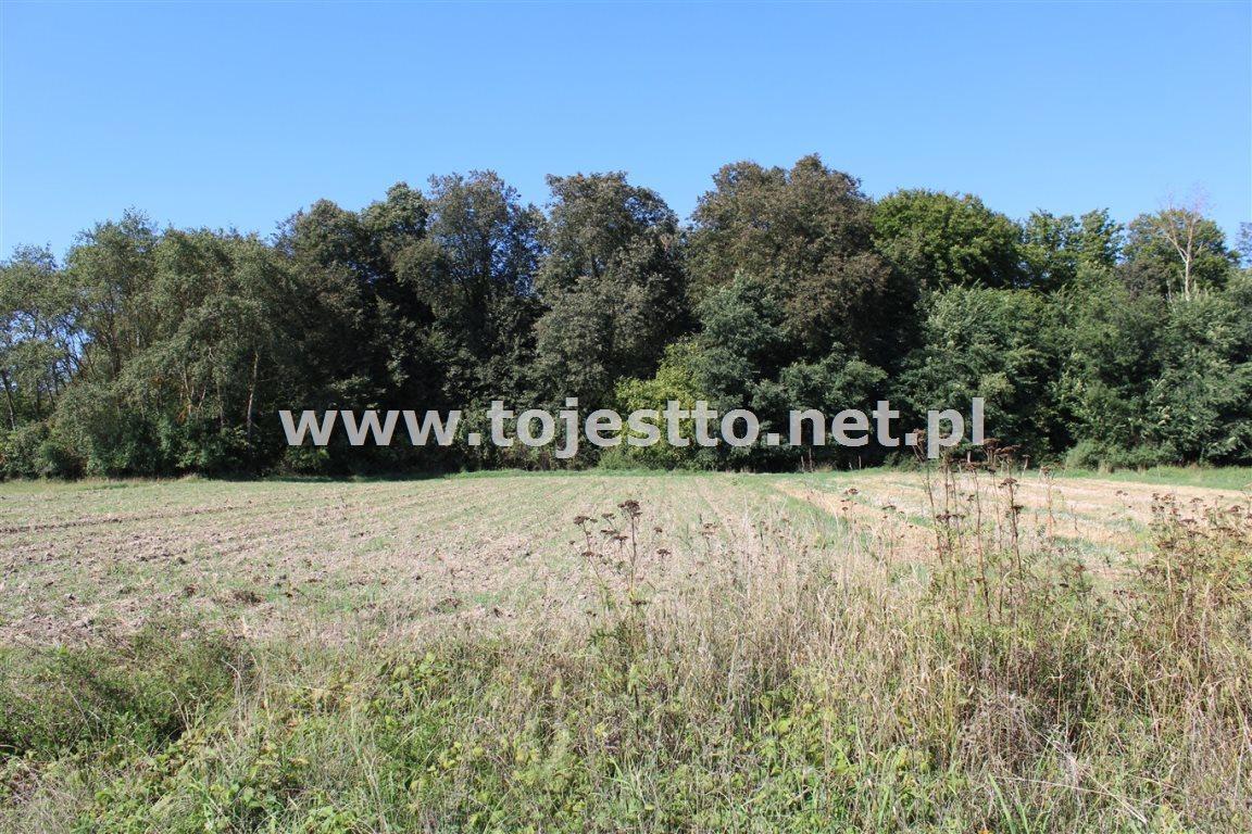Działka leśna na sprzedaż Werbkowice  2500m2 Foto 2