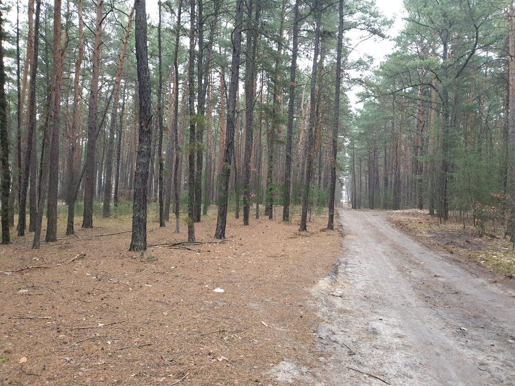 Działka leśna z prawem budowy na sprzedaż Sękocin-Las  2100m2 Foto 4