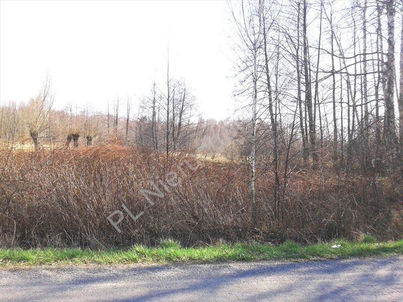 Działka rolna na sprzedaż Stare Budy  5912m2 Foto 4
