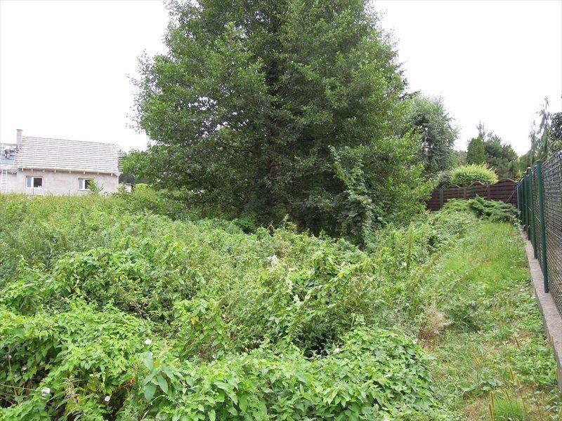 Działka rolna na sprzedaż Wilczyn, Wilczyn Leśny  22000m2 Foto 5