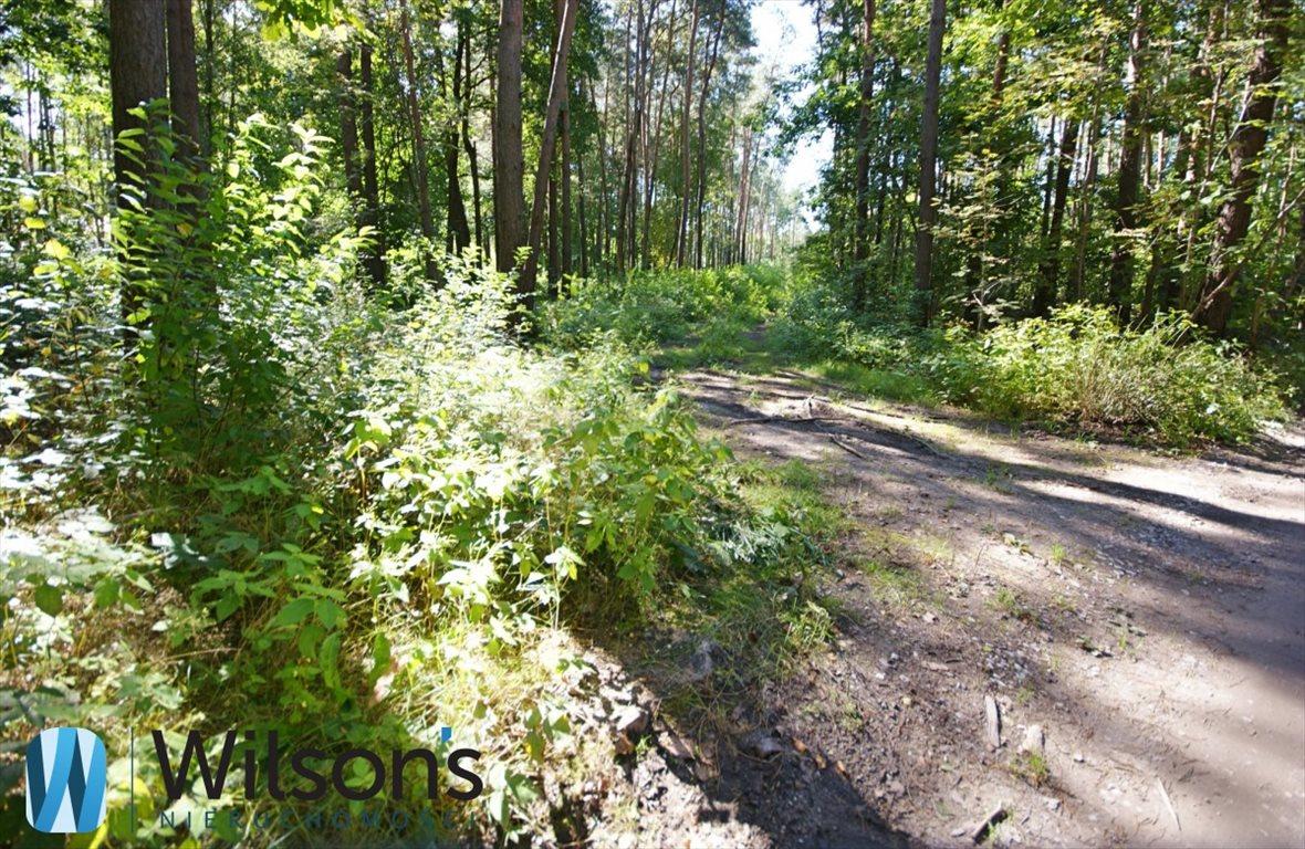 Działka leśna na sprzedaż Władysławów  10551m2 Foto 2