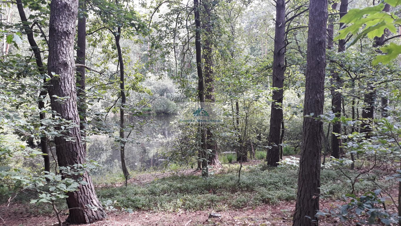 Działka leśna na sprzedaż Warszawa, Wawer, Międzylesie, Torfowa  3456m2 Foto 5