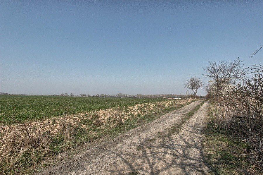 Działka rolna na sprzedaż Siadło Górne  3000m2 Foto 3