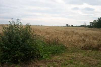 Działka rolna na sprzedaż ok. Trzebnicy, Polna  80000m2 Foto 2