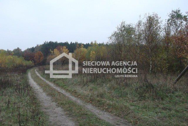 Działka leśna na sprzedaż Stare Gronowo  49000m2 Foto 3