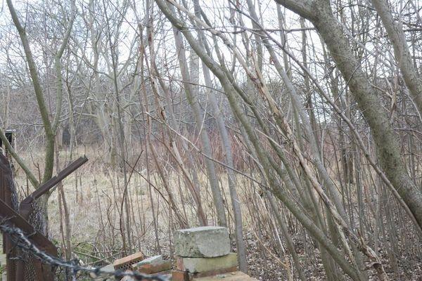 Działka rolna na sprzedaż Radom, Halinów, Garbarska  5413m2 Foto 6