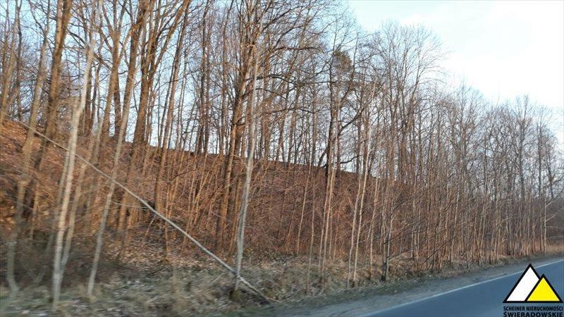 Działka leśna na sprzedaż Kościelniki Górne, Pogórze Izerskie  4800m2 Foto 7