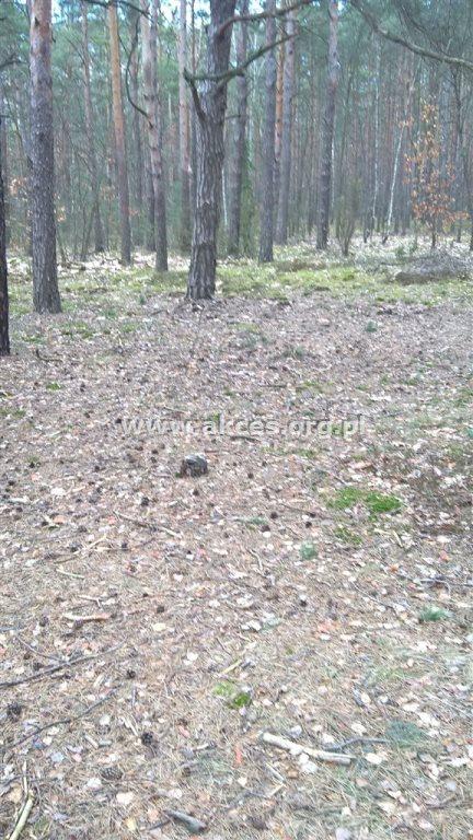 Działka leśna na sprzedaż Otwock, Soplicowo  5000m2 Foto 3