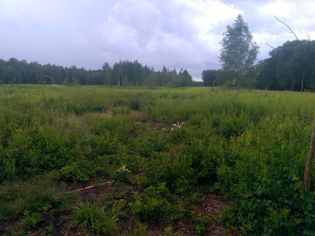 Działka rolna na sprzedaż Mokre  13000m2 Foto 2