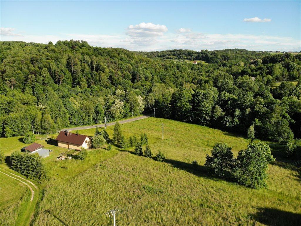 Działka leśna na sprzedaż Borówna  3600m2 Foto 4