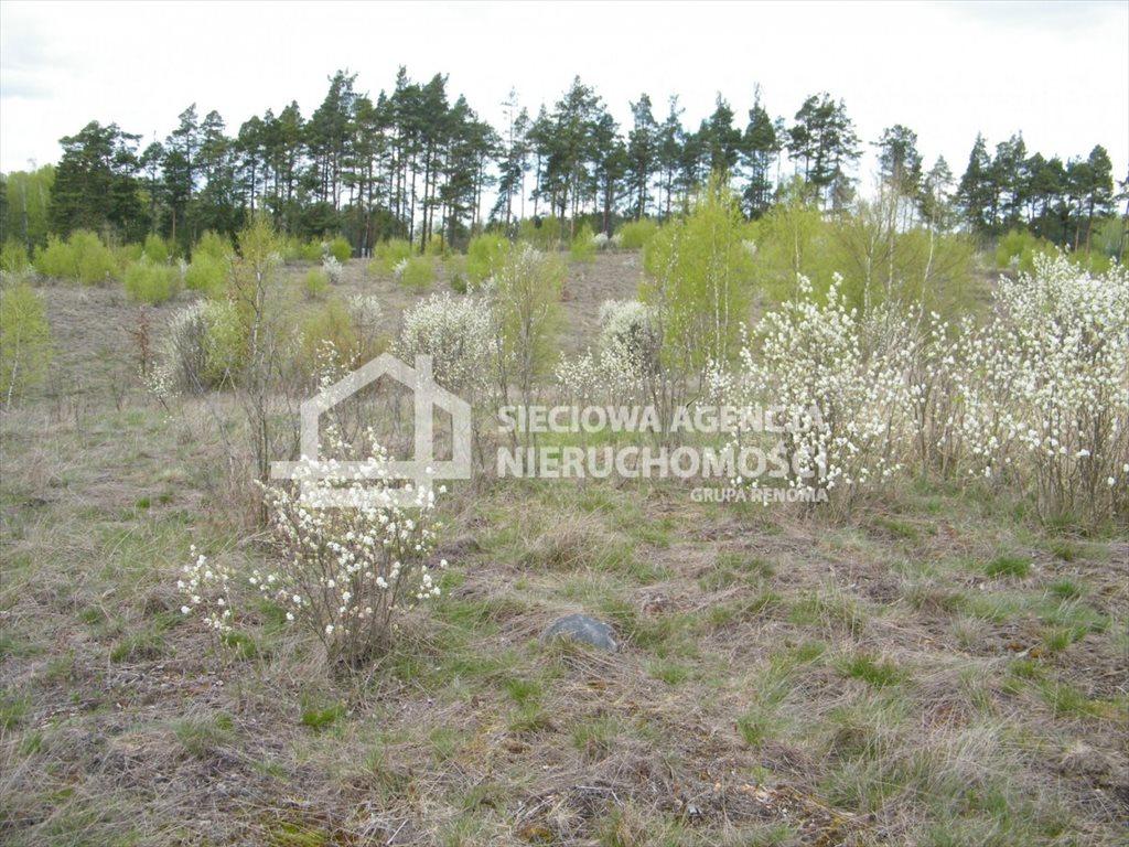 Działka leśna na sprzedaż Huta Kalna  20250m2 Foto 9