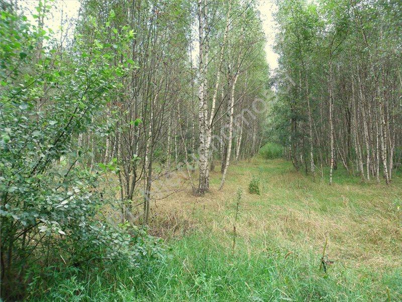 Działka leśna na sprzedaż Izabelin  27242m2 Foto 4