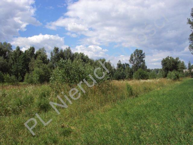 Działka rolna na sprzedaż Holendry Baranowskie  4000m2 Foto 10
