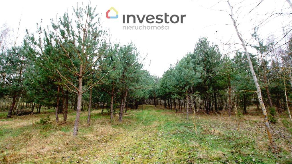 Działka leśna z prawem budowy na sprzedaż Bukowa Wielka  39157m2 Foto 4