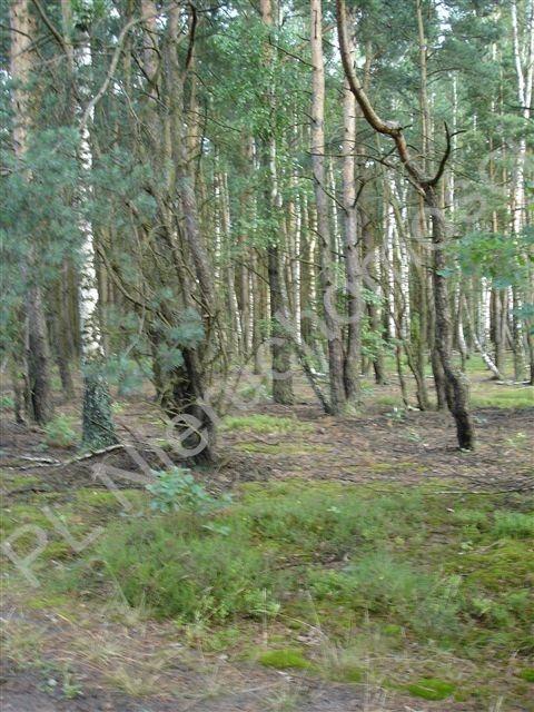 Działka leśna na sprzedaż Ołdakowizna  7774m2 Foto 2