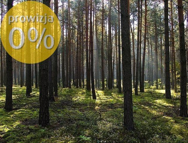 Działka leśna na sprzedaż Rostki Wielkie  50000m2 Foto 1