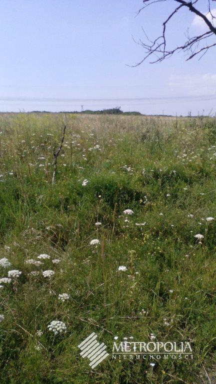 Działka rolna na sprzedaż Zagórze  1000m2 Foto 1