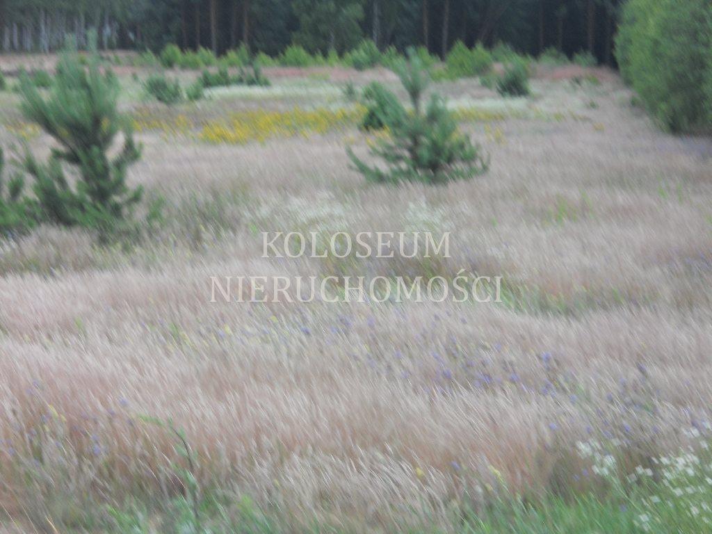 Działka budowlana na sprzedaż Toruń  3046m2 Foto 2