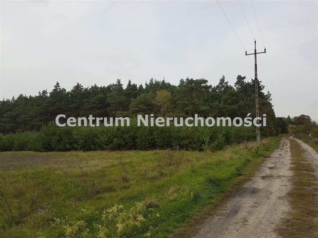 Działka leśna na sprzedaż Bałdrzychów  21000m2 Foto 1