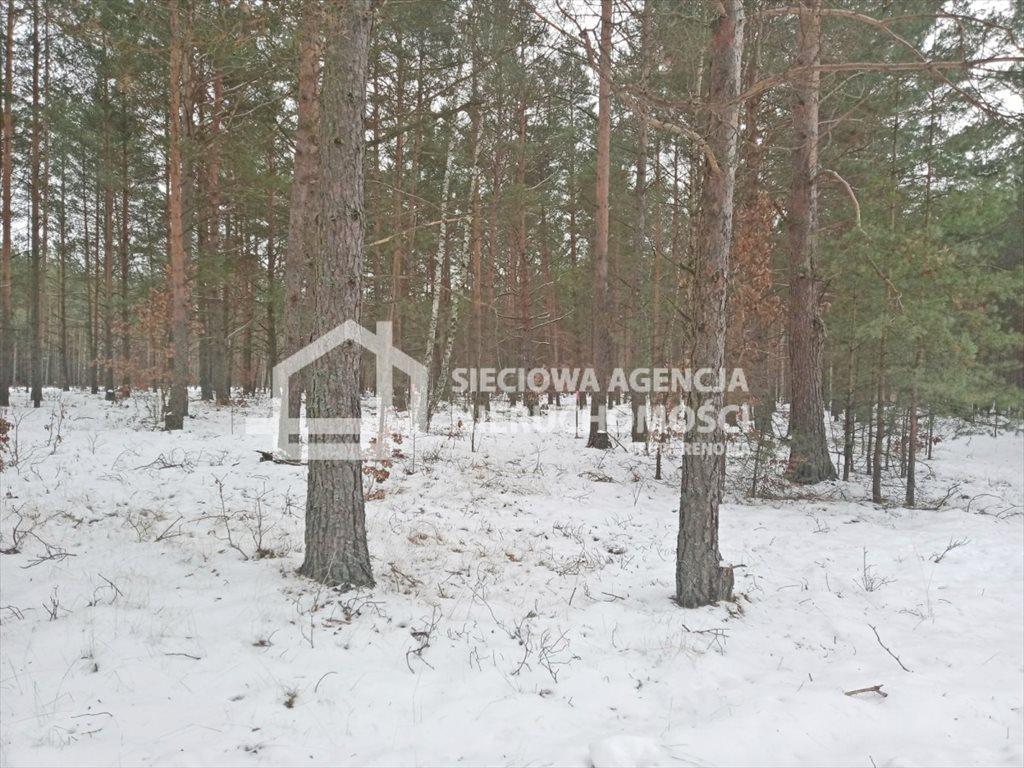 Działka leśna na sprzedaż Zawada  5155m2 Foto 3