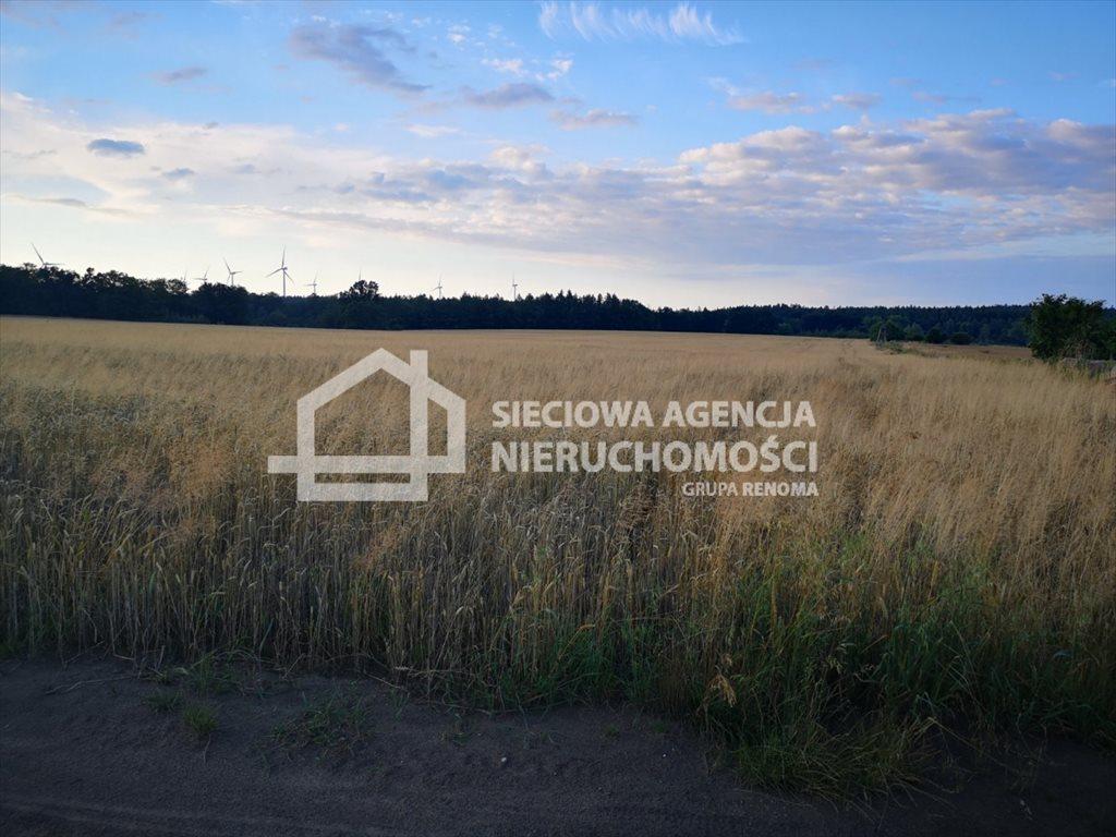 Działka rolna na sprzedaż Białogarda  148300m2 Foto 6