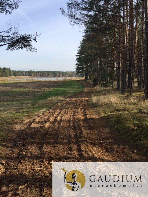 Działka leśna na sprzedaż Klocek  60000m2 Foto 4