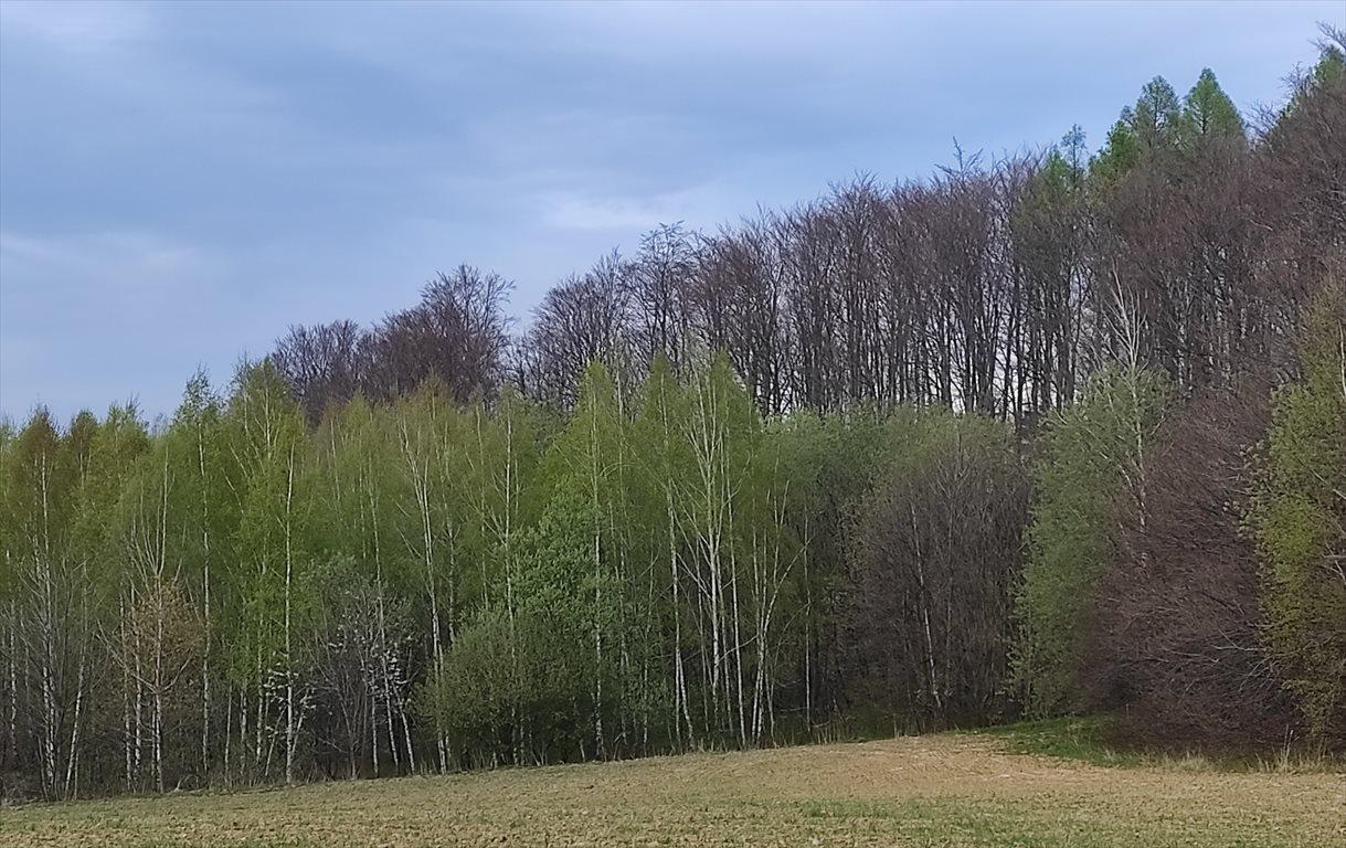 Działka siedliskowa na sprzedaż Przeworno, Romanów, Na Południe od Wrocławia  33558m2 Foto 6