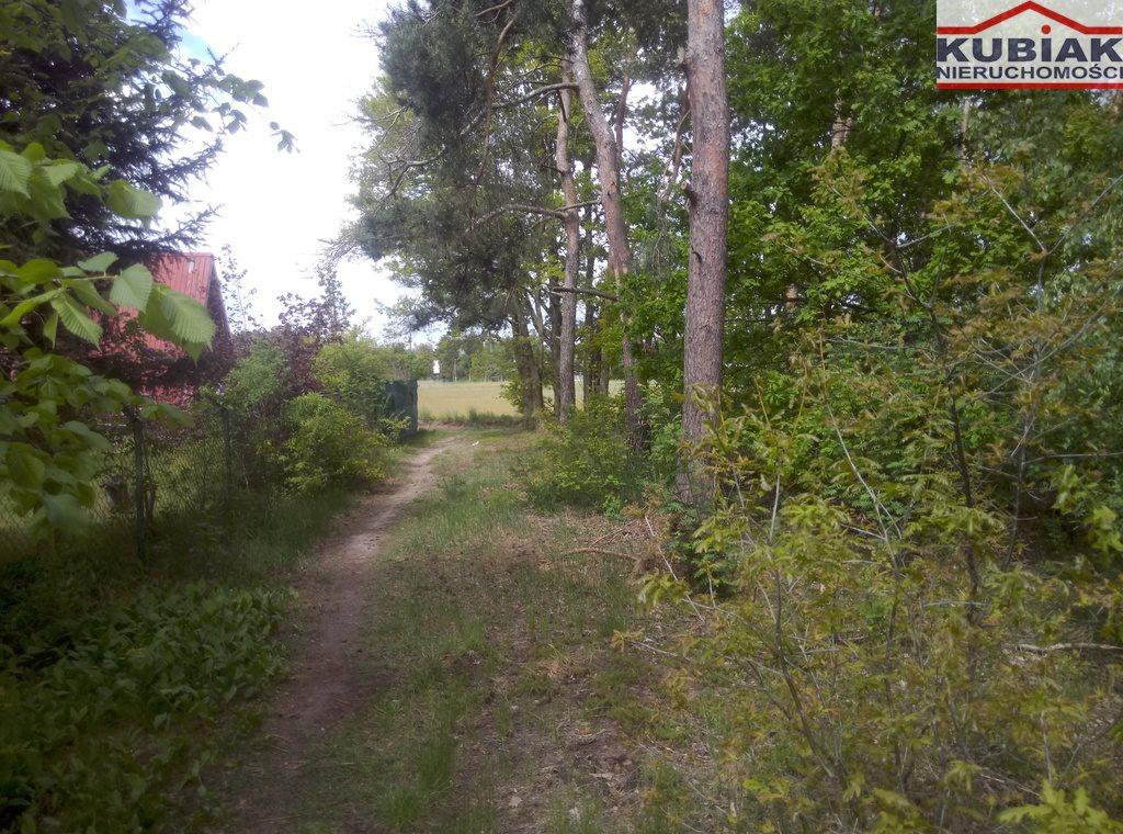 Działka leśna na sprzedaż Powązki  3600m2 Foto 1