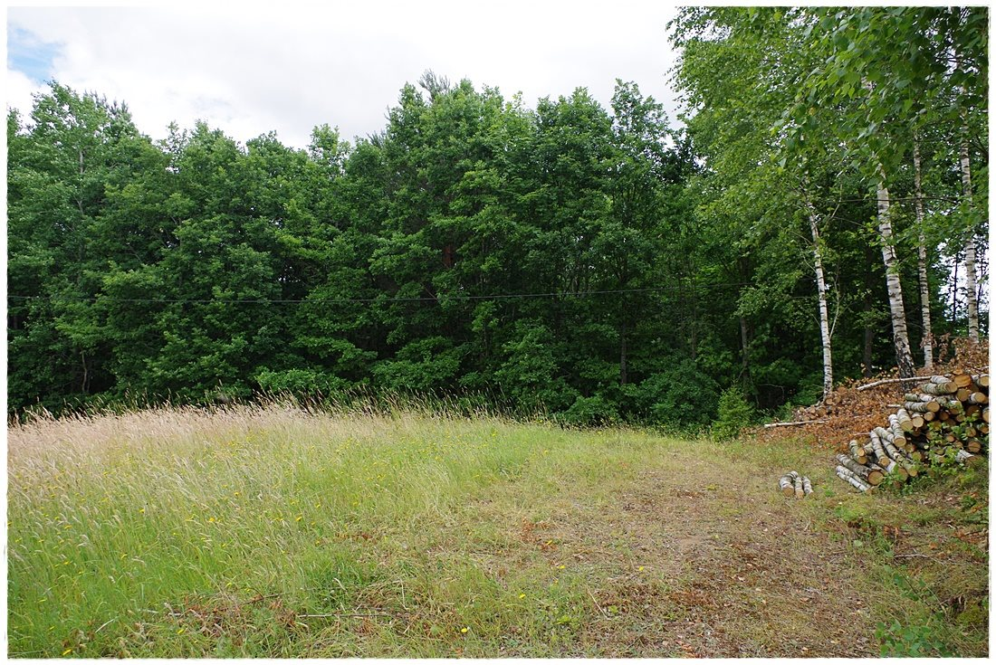 Działka rolna na sprzedaż Linia, Dębowa  12607m2 Foto 1