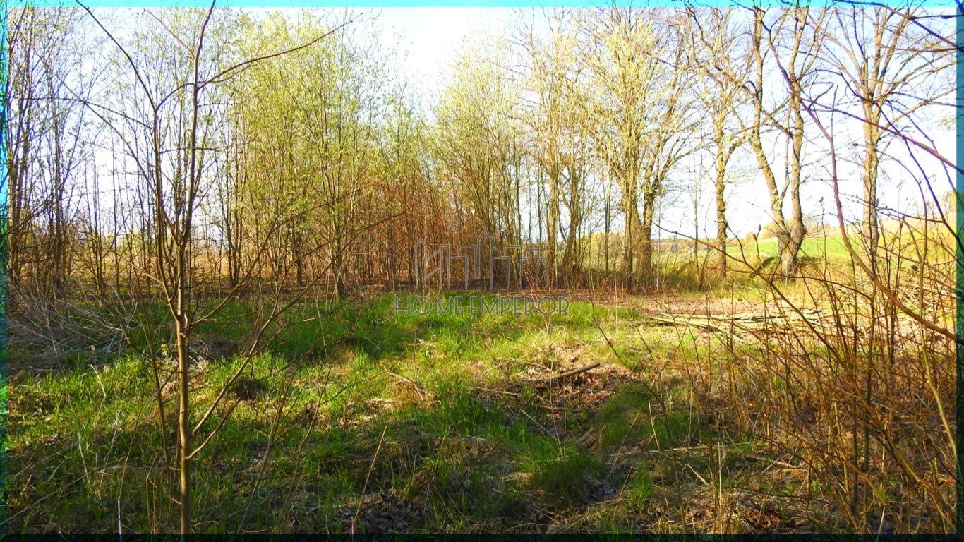 Działka rolna na sprzedaż Gołogóra  3004m2 Foto 5
