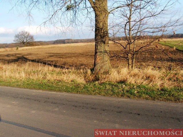 Działka rolna na sprzedaż Siedlce  12000m2 Foto 2