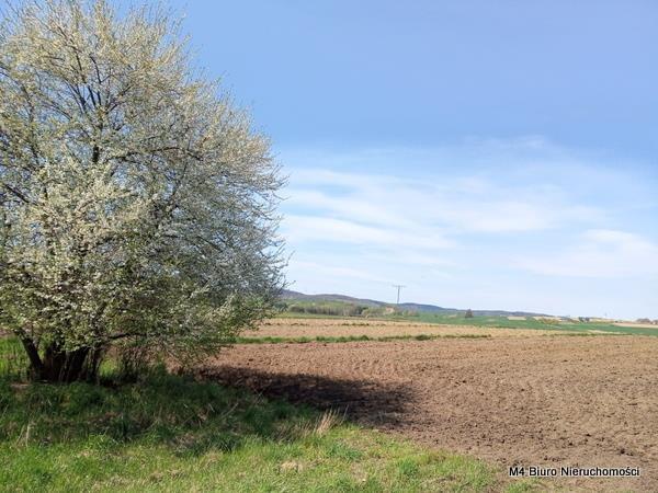 Działka rolna na sprzedaż Rogi  12000m2 Foto 3