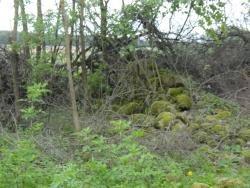 Działka siedliskowa na sprzedaż Świdry-Dobrzyce  6400m2 Foto 3