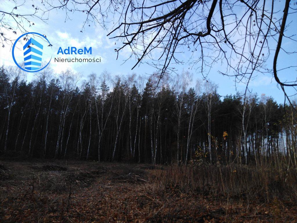 Działka leśna na sprzedaż Jeziórko, Świerkowa  5000m2 Foto 5