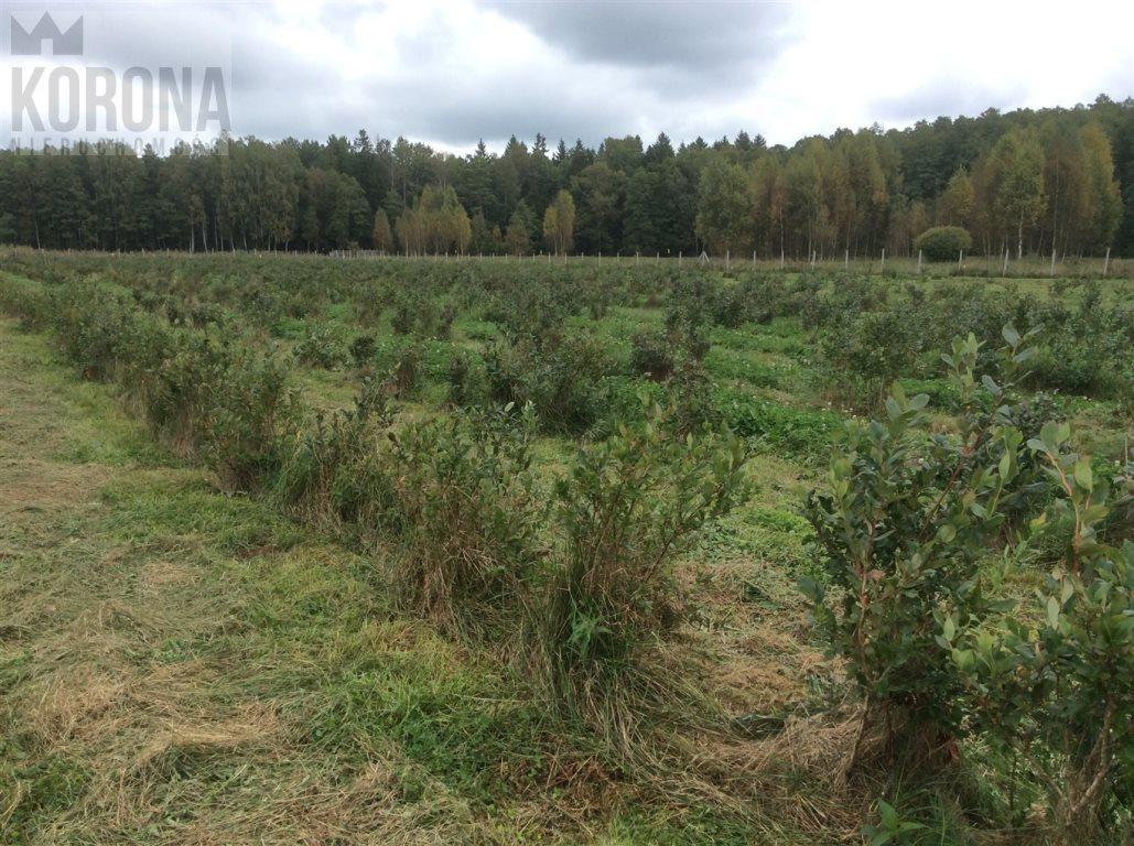 Działka rolna na sprzedaż Pasieki, Babia Góra  13300m2 Foto 8