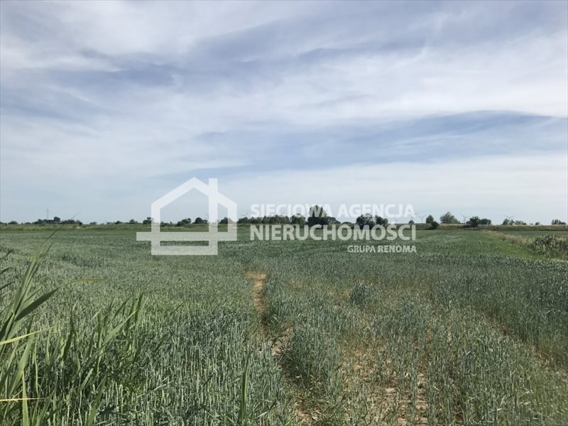Działka rolna na sprzedaż Rybina  77672m2 Foto 5