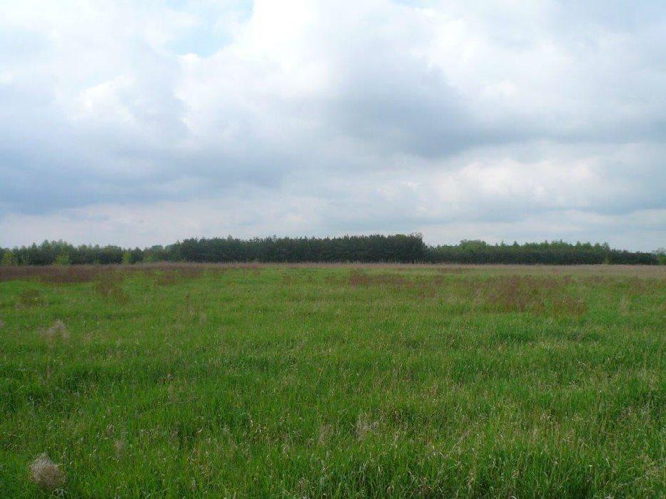 Działka inwestycyjna na sprzedaż Kolonia Bolimowska-Wieś  49600m2 Foto 2