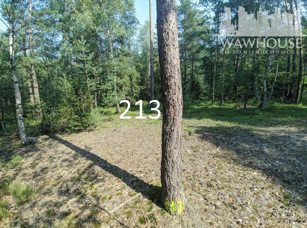 Działka leśna na sprzedaż Czernice  23500m2 Foto 12