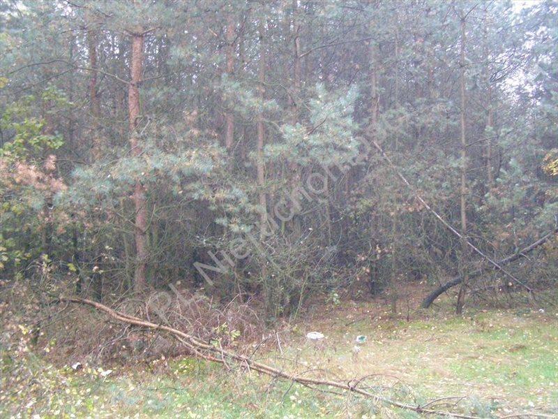 Działka rolna na sprzedaż Pieńki Osuchowskie  27700m2 Foto 9
