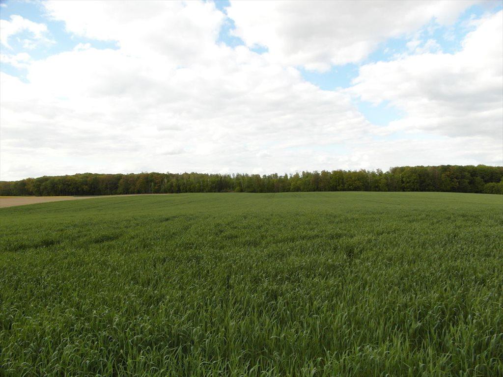 Działka rolna na sprzedaż Orle  111800m2 Foto 3