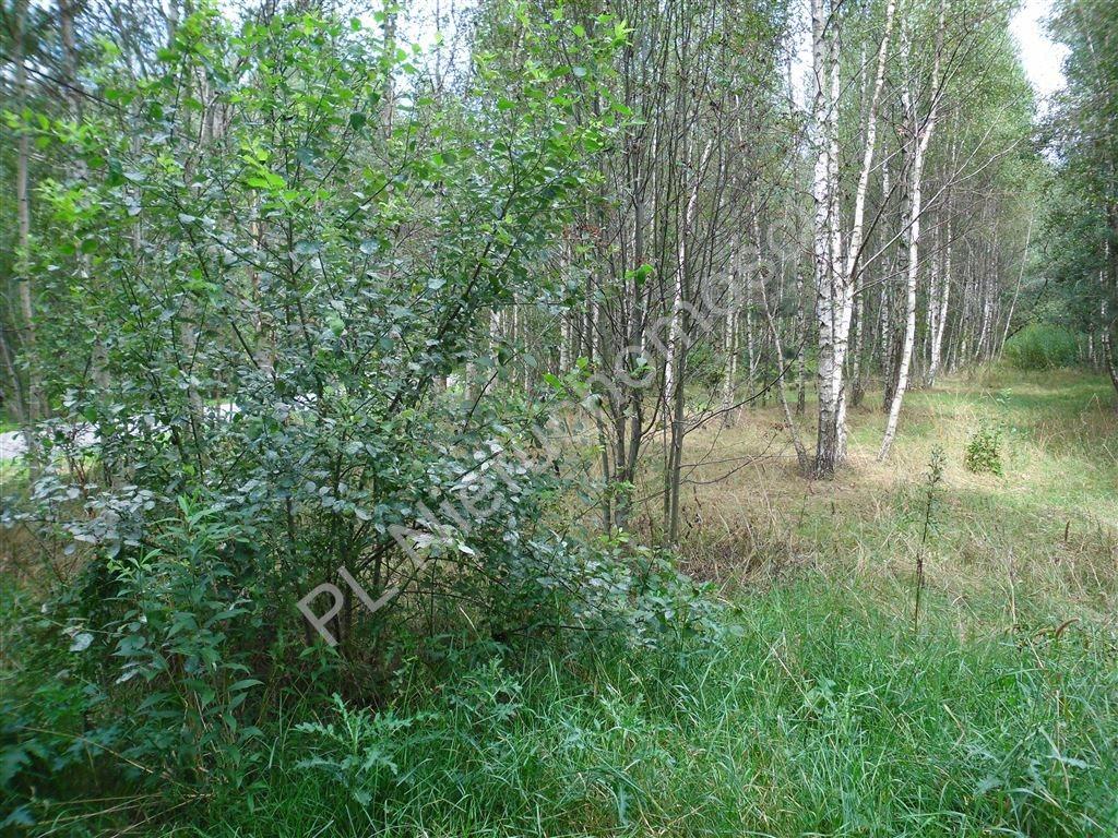 Działka leśna na sprzedaż Izabelin  27242m2 Foto 8