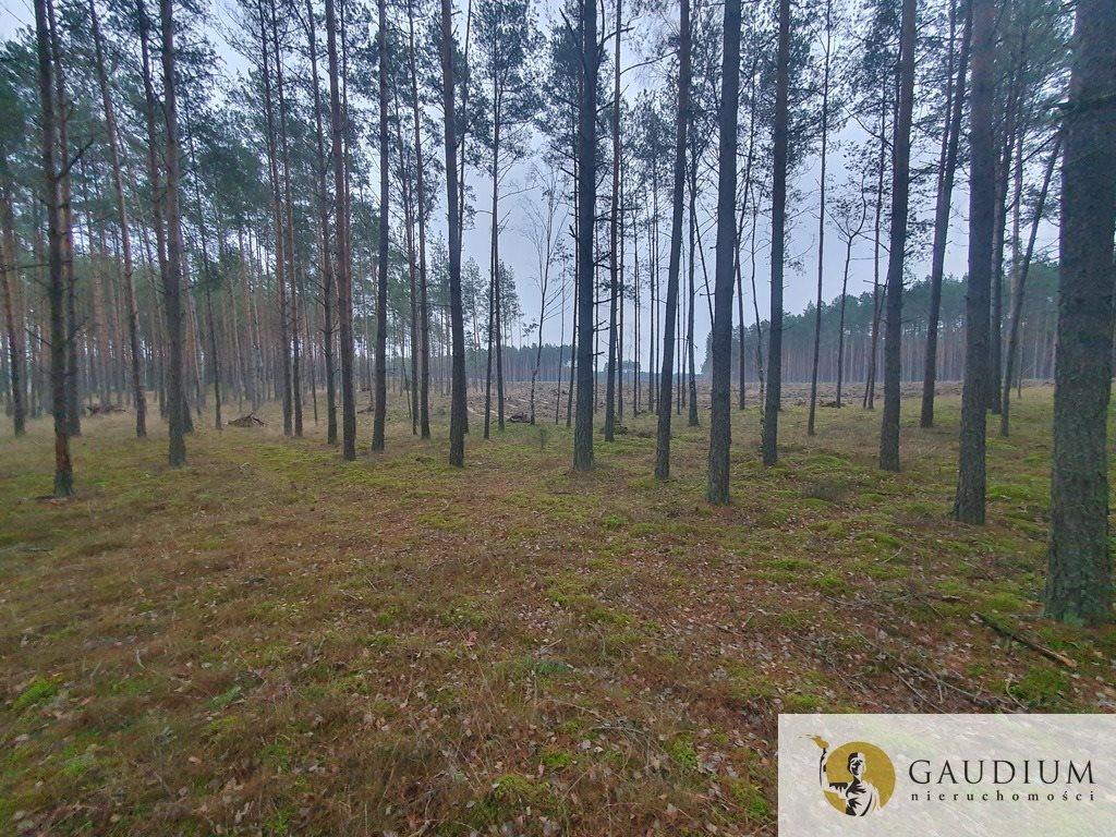 Działka leśna na sprzedaż Klocek  60000m2 Foto 9