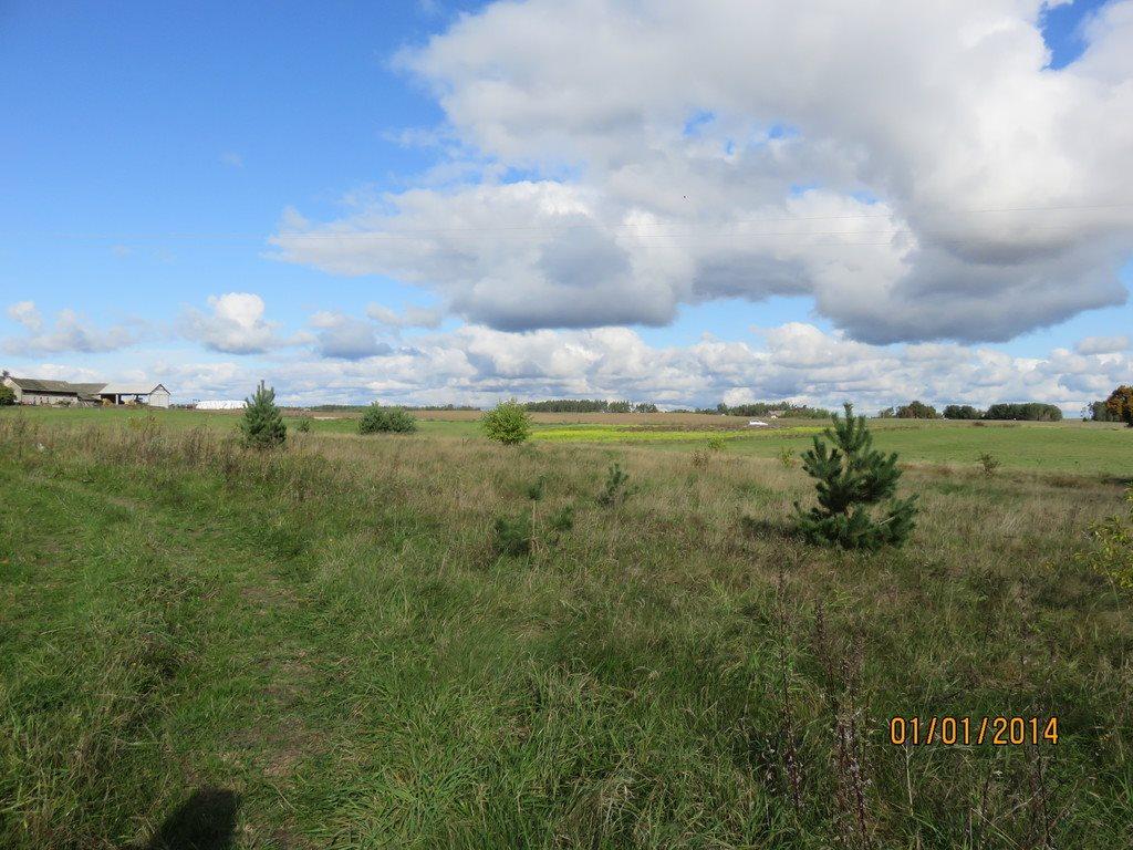 Działka siedliskowa na sprzedaż Dąbrowa  11000m2 Foto 5