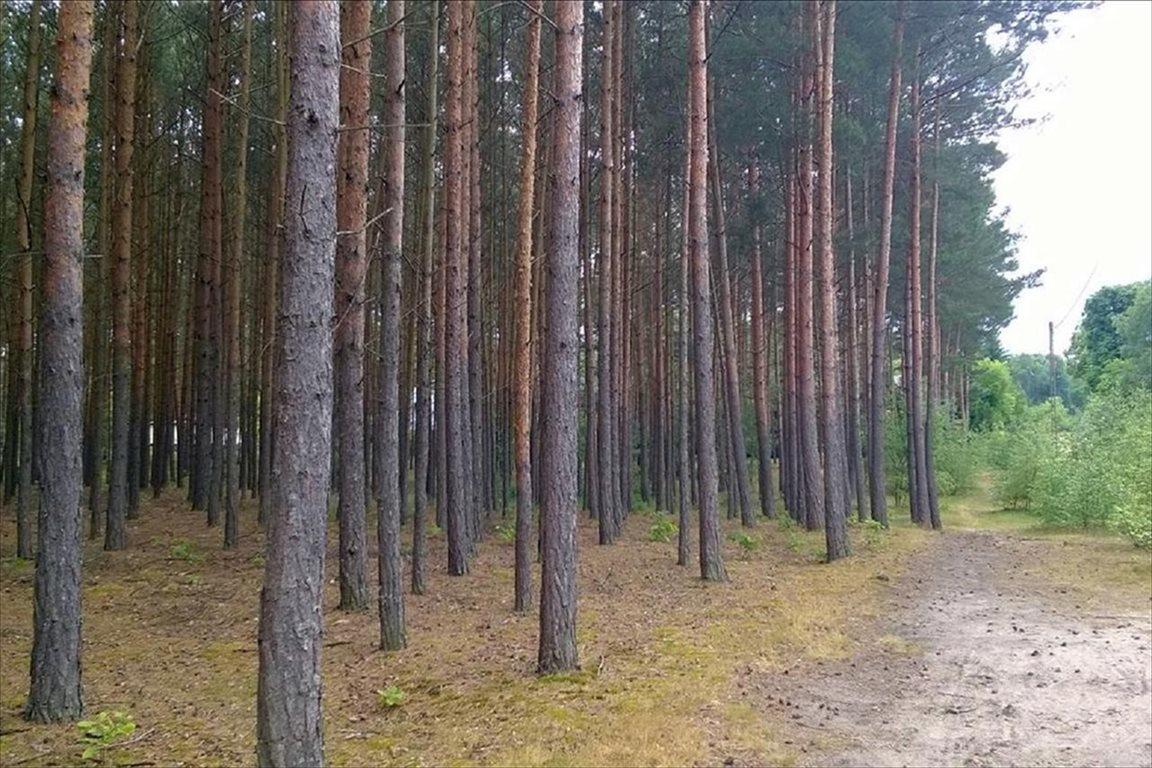 Działka leśna na sprzedaż Dopiewo, Dopiewo  28276m2 Foto 1