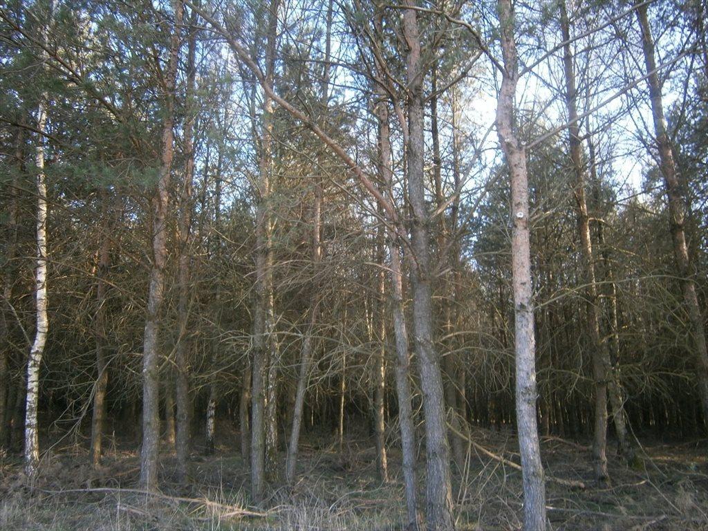 Działka leśna na sprzedaż Stara Wiśniewka  55661m2 Foto 5